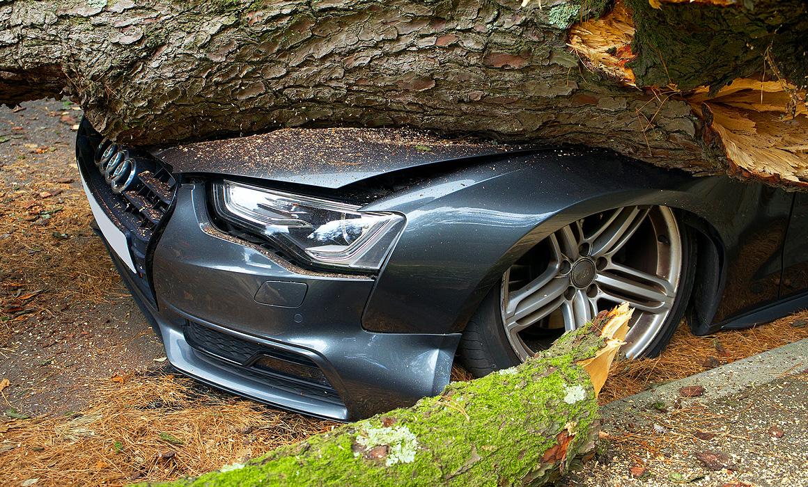 Voiture écrasée par un arbre